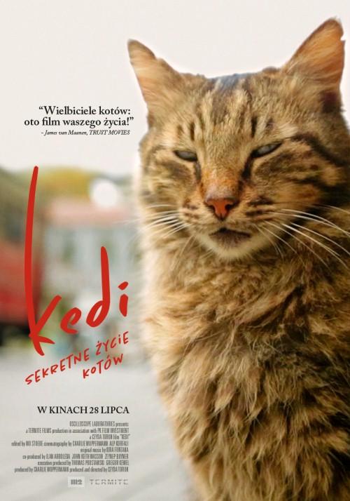 Kedi Sekretne życie Kotów 2016 Edukacja Filmowa